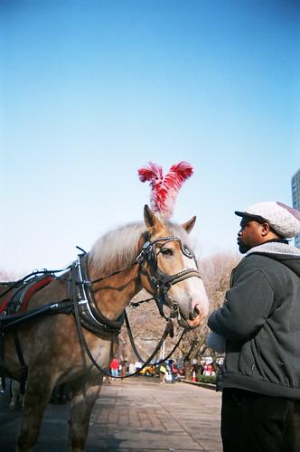 {34/365} horse & handler