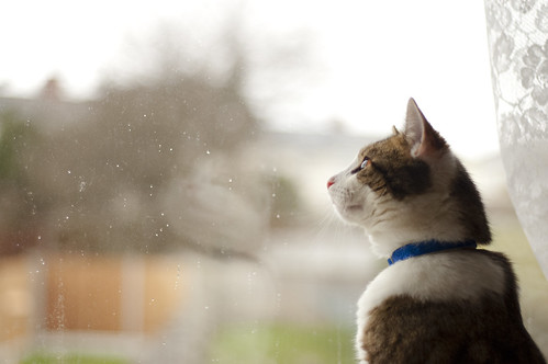 Looking Out on a Rainy Day
