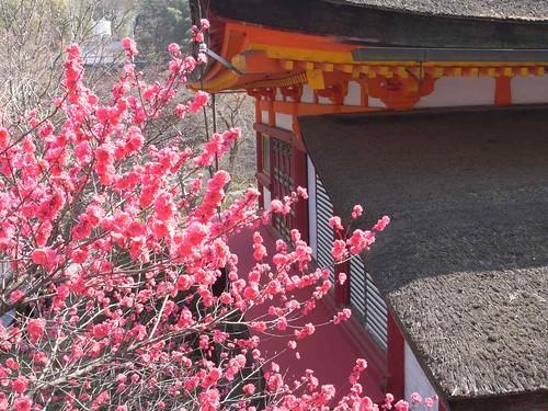 09-04-10【桜】@談山神社-12