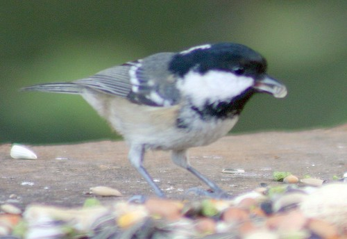 Coal Tit by you.