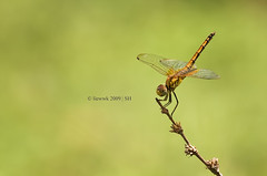 8.1 Dragonfly