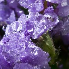 Shes put all her best Jewels on (ToveM) Tags: purple crystal drop jewel statice 4mazingorgeoushotsoflowers