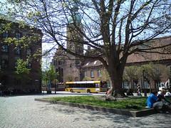 Det gamle træ på Klostertorvet