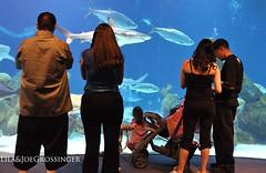 What a view of the fish (Birdman of El Paso) Tags: park city aquarium nikon texas tx albuquerque joe el lila paso nikkor biological vr birdman 18200mm d90 grossinger