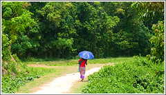 The jungle of life. [..Birishiri, Bangladesh..] (Catch the dream) Tags: life road travel woman nature girl umbrella colorful dress path walk bongo dressup tribal hills clothes jungle tribe bengal bangladesh props pathway indigenous bengali indigenouspeople bangladeshi attire bangali netrokona birishiri gettyimagesbangladeshq2