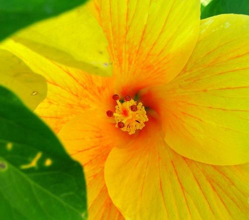 Wesak Blossom