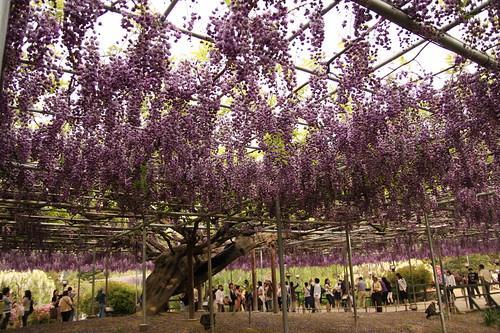 Ashikaga Flower Park 07