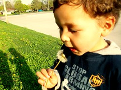 Eating Flowers (Eyes Of 16) Tags: boy fun outdoors small 3yearold