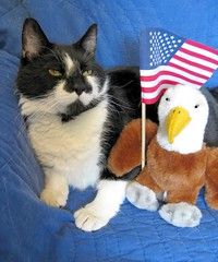 Montana the Cat Preparing for Memorial Day, Flag Day & 4th of July (Pixel Packing Mama) Tags: cute 510fav wonder fantastic adorable greatshot catsandkittensset furryfriday exclamationpoints montanathecatset favorites5 catpix pixelpackingmama 510favoritesonlyoneaday dorothydelinaporter worldsfavorite flagsset 100viewspool views100pool wonderfulunlimited montanathecat~fanclub justmoggies mywinners montanathecat~fanclubpool 5favesandlessthan100viewswhenaddedpool cutecatspool usaunitedstatesofamericapool ceruleanthecat~fanclub commentedwithanicondirectorypool ceruleanthecat~fanclubpool cbat 5099viewswhenthereisroom blackmaskkittycatspool tuxedocatsset tuxedocatspool exclamationpointspool pixwithexclamationpointsincommentsset catscookiecatfriends~pool catsandobjectspool theredmakesitwithoutdominatingpool everythingamericapool allcatsallowed centurianclub100200viewspool catcatscatzpool mycatspool allcatsallowedpool ourbelovedcatspool maskedblackcatspool yearofholidays canonpowershota720isiistart112508set canonallcanoniistart112508set thecorvallisoregonyearsiistarting112508set uploadedfirsthalfof2009set thecorvallisoregonyearspart7set ilikeflagspool catsarecoolpool 50plusphotographersaged50andbetterpool patrioticcats americaamerica~mothersdaypool patrioticcatskittensset favupmovedtofavoritedpixvol2 favoritedpixvolii~1sthalfof2009set blackandwhitewhiteandblackwanttoseepool pixelpackingmama~prayforkyronhorman oversixmillionaggregateviews over430000photostreamviews