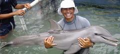 Cyril dolphin calf (ABC Dolphin Trainer Academy) Tags: dolphin trainerdolphintrainerentrenadordedelfinestrainingsessionpositivereinforcementtrainingentrenamientorefuerzopositivacaribbean dolphindiscoveryanimaltrainerentrenadordeanimales