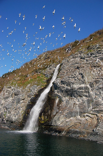 WhittierWaterfallwithBirds