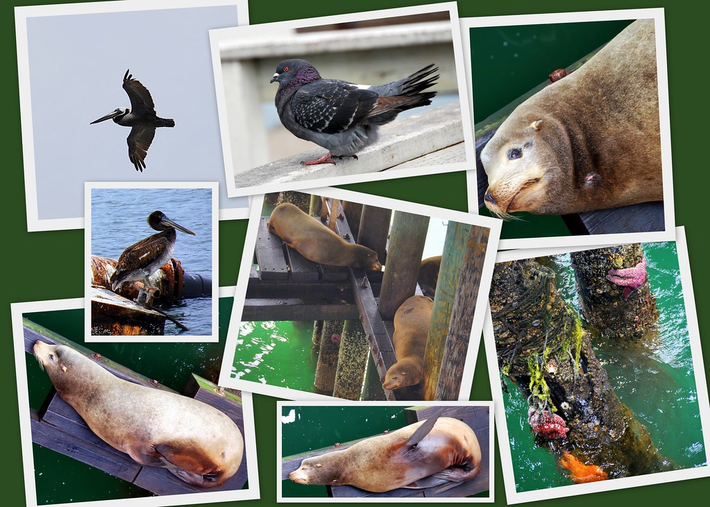 Santa Cruz animals and birds