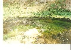(golondriname) Tags: paseo cerro verdes agita pelitos quilpu saltacaro
