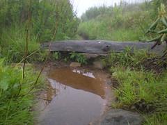 8 - Dead Water Bar