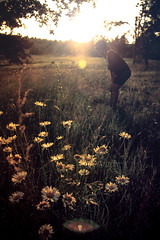 i've been trying to be where you are. (megan burges) Tags: light summer sun mountain lauren home girl strange beautiful field daisies friend megan best laugh flare daisy arkansas aqualung burges rauhoff