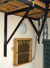 Observation Hive 1