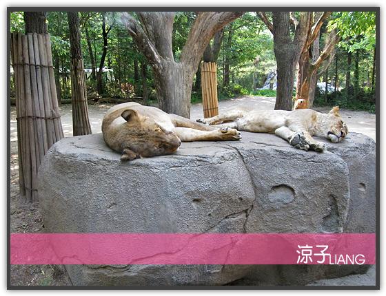 愛寶樂園(動物篇)09