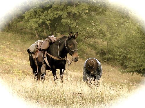 Vous avez le bonjour d'un mulet et d'une bardote 3621922573_0d3a321111