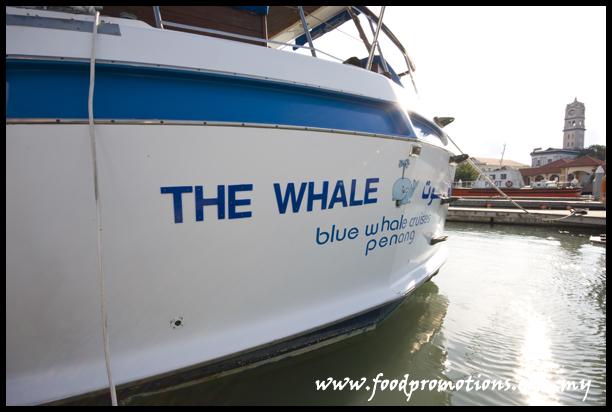 Blue Whale 06