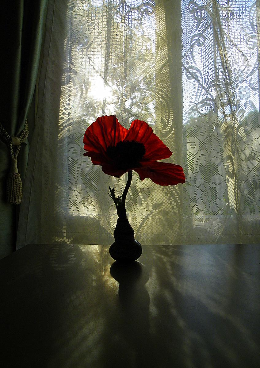 Dusk Poppy II
