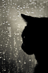 raining days (.sxf) Tags: portrait blackandwhite pet black window rain animal cat blackcat dark spring bokeh fenster raindrops katze regen frhling catportrait regentropfen schwarzekatze bokey catprofile blackwhitephotos raindropbokeh bokehhearts regentropfenbokeh