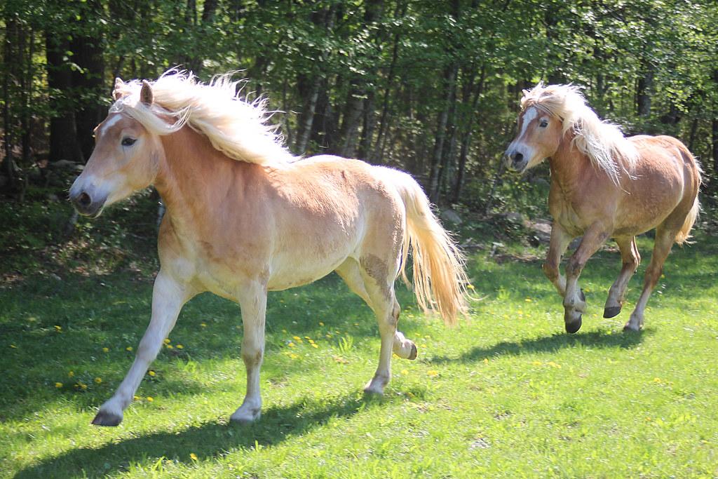 horses 191x