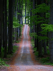 The road (mags_Tag) Tags: road wood austria woods path strasse paths wald caminhos weg wienerwald viennawoods oesterreich hesiod tullnerbach pressbaum irenetal gettyimagessalq1