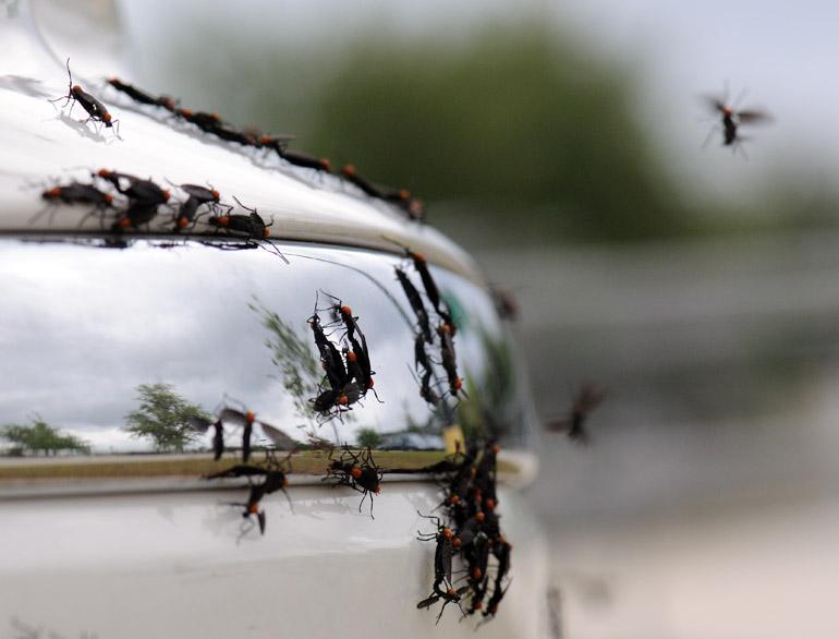 web_lovebugs_bumper_0177_2717