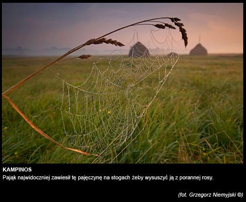 Grzegorz-Niemyjski-Krajobraz-FotoGeA2-foto-8