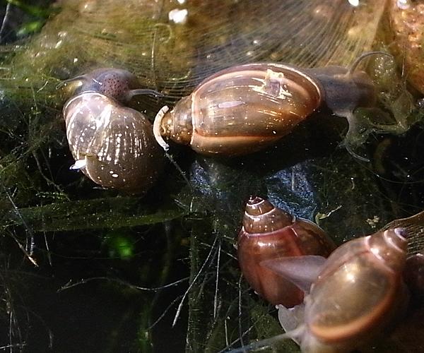 水面移動前の貝