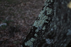 (Federica [C]) Tags: wood trees sunset sky italy sun mountain mountains tree nature set alberi vintage landscape person 50mm landscapes nikon flickr italia bokeh grunge sigma cielo indie horror lonely 24mm nikkor sole albero bosco nikond200 tumblr federicacapace