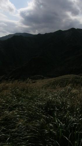 044.陽光灑在芒草上