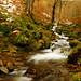 Bosque Redes