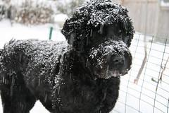 snowy skippy