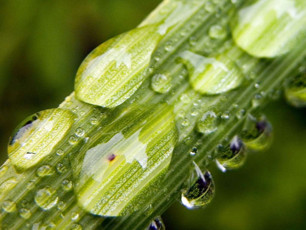 Water On Plants