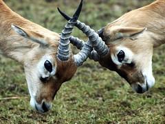 politics (snsweb) Tags: nature animals germany zoo olympus e3 opelzoo kronberg specnature mywinners
