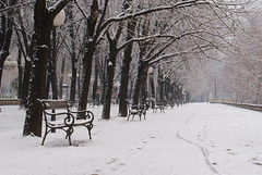 Skopje snow (kosova cajun) Tags: trees snow landscape macedonia benches zima lindentrees sneg skopje makedonija marchsnow dimër peisazh shkupi maqedonia borë