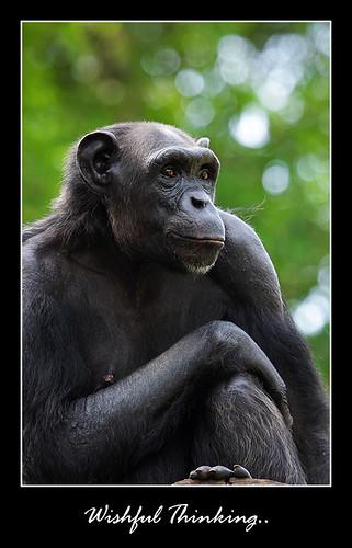 Zoo Melaka series