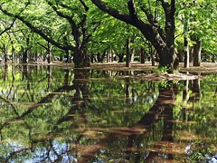 Blue bayou (tanakawho) Tags: park light reflection tree green water sunshine forest puddle sunny  tanakawho 1on1naturephotooftheweek 1on1naturephotooftheweekmay2009