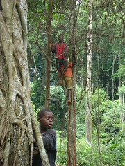 Children climbing trees in the forest