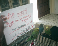 The Worlds Most Recently Posted Photos Of Birds And Petsmart