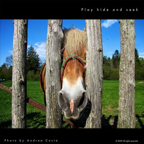 Play hide and seek