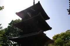 本蓮寺 三重塔 #1