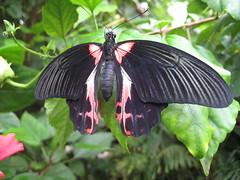 Un papillon!