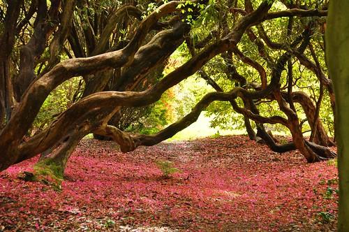Amistad entre rododendros