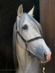 23.05.2009 (hippo1107) Tags: canon is powershot pony pferd s5 bolero hengst reitstunde marienhof ponyhof ponyreiten canonpowershotsis reiterhof reitunterricht greimerath marienhofgreimerath