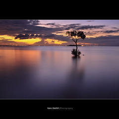 Water and my friend, mix like milk and cookies.... ([ Kane ]) Tags: ocean longexposure sea sky sun tree water clouds soft glow australia brisbane explore qld queensland kane wellingtonpoint 2470 gledhill 50d kanegledhill kanegledhillphotography