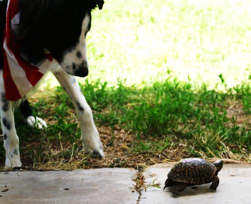 jake&turtle2