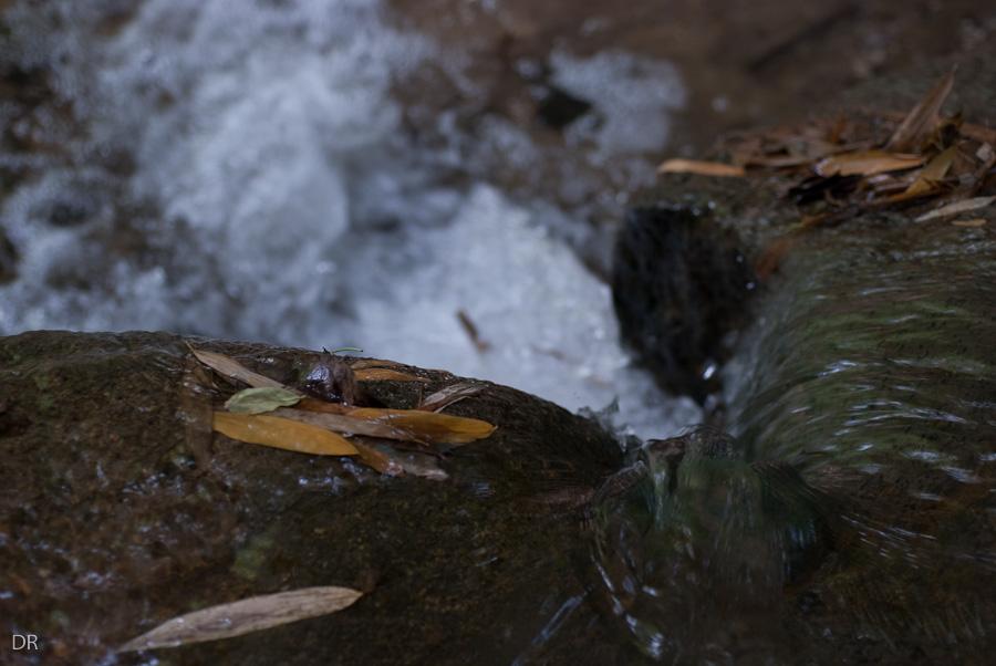 Splash...