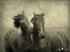 Horses don't whisper, they just talk (larsvandegoor.com) Tags: horses texture ldlnoir